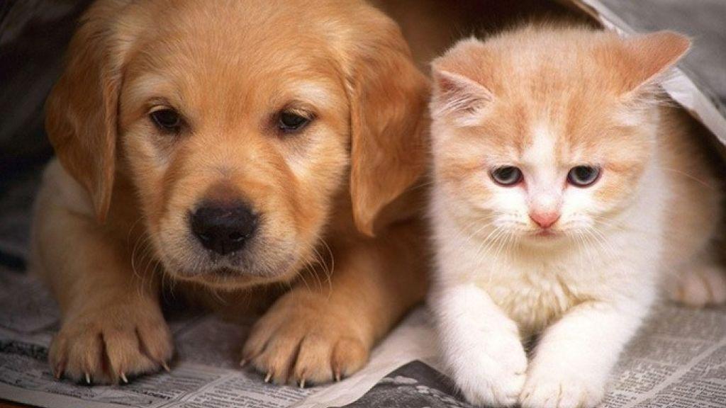 Casi 140.000 perros y gatos fueron acogidos en refugios y protectoras en España durante 2018