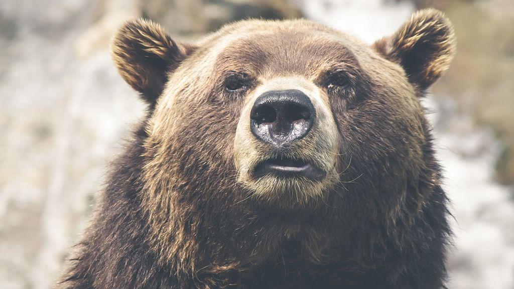 """Sacrifican a un oso en un parque zoológico por ser """"muy cariñoso con los humanos"""""""
