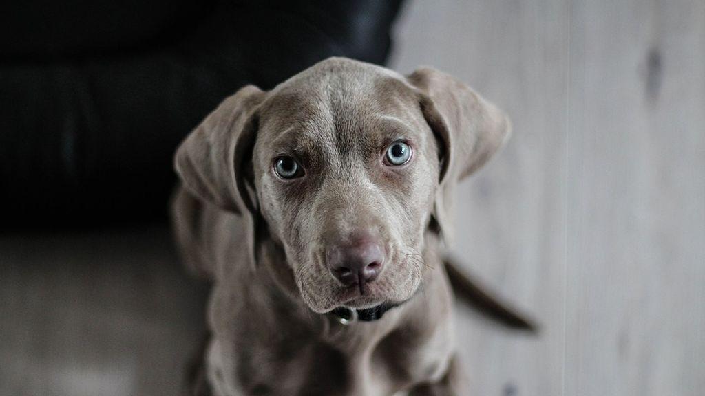 Si tu perro te mira con cara de pena y ojos triste es que quieres que le des de comer