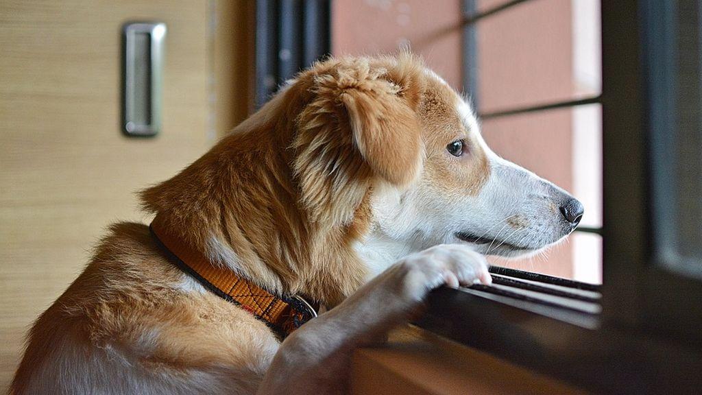 VOTA: ¿Es maltrato animal que un perro viva en dos casas por ser de custodia compartida?