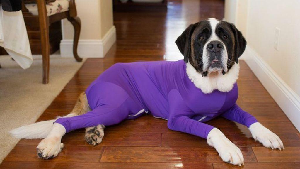 Fantasía o aberración: la malla atrapapelos para tu perrete