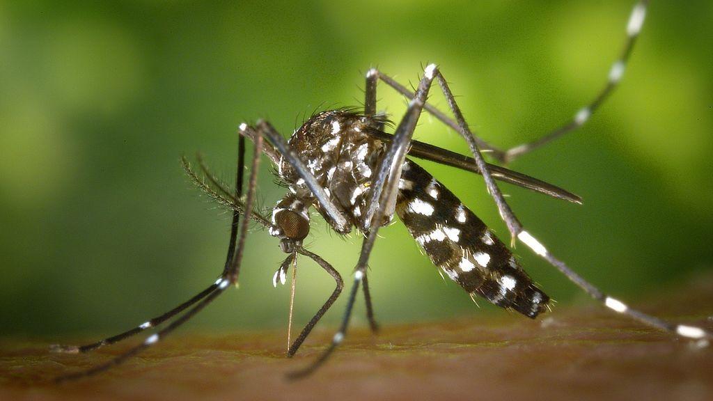 Todo sobre el chikunguña, la enfermedad tropical que ha llegado a España
