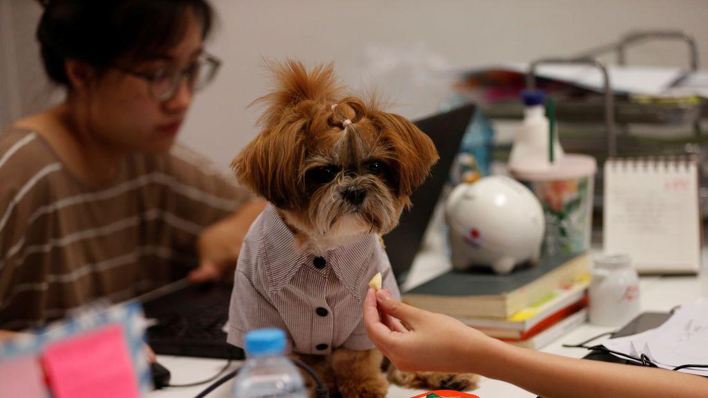 Lleva tu perro al trabajo, una fórmula para aumentar la productividad