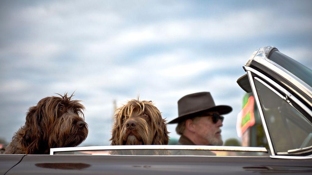 Upper en coche con sus perros