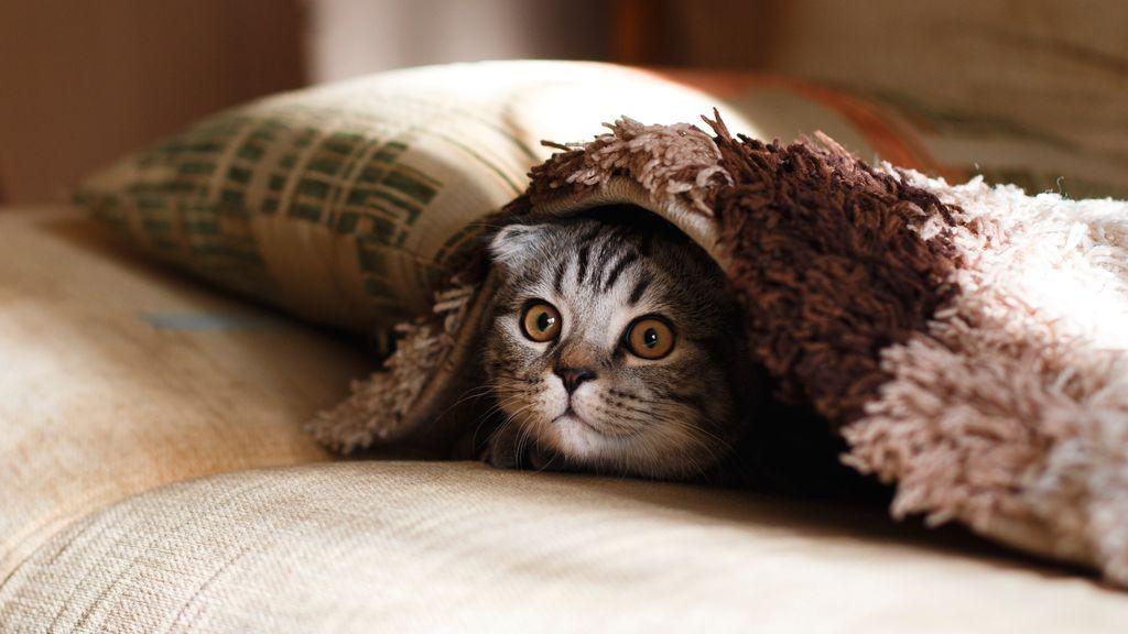 Nuevo reto para los más observadores: encuentra al gato escondido