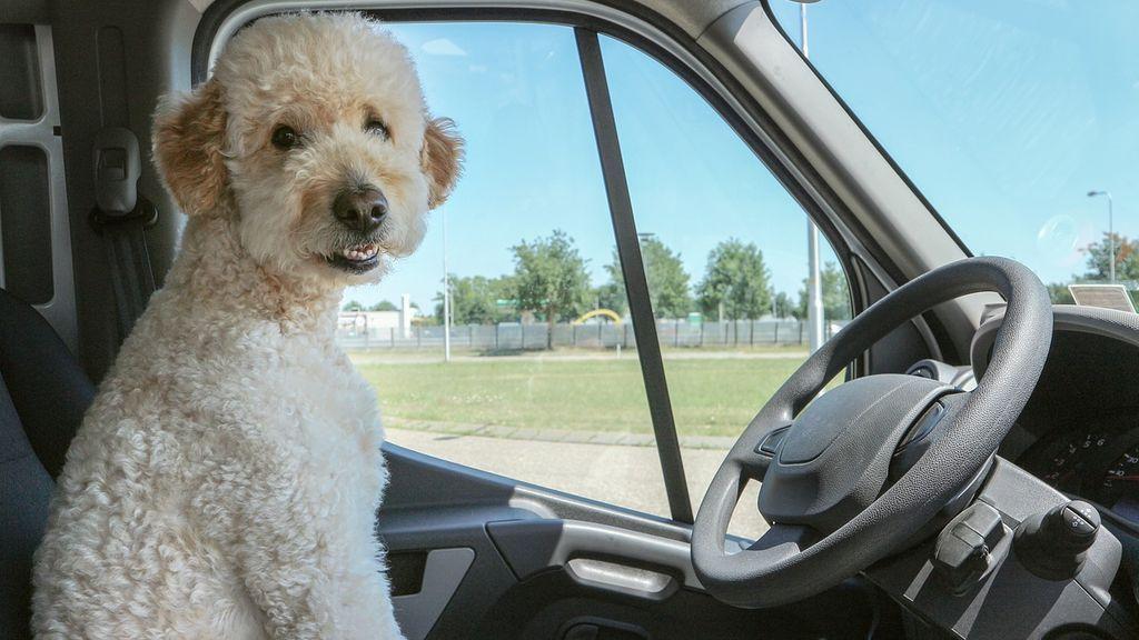La Policía advierte sobre cómo actuar para salvar a un animal encerrado en un coche