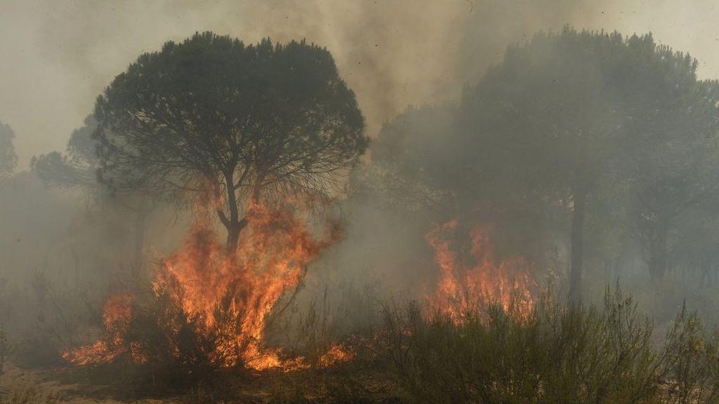 Las llamas queman un árbol