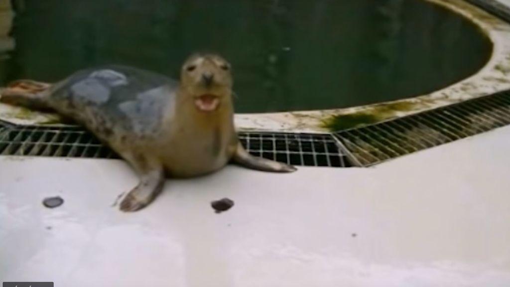 Una foca aprende a cantar la melodía de 'Star Wars' con increíbles resultados