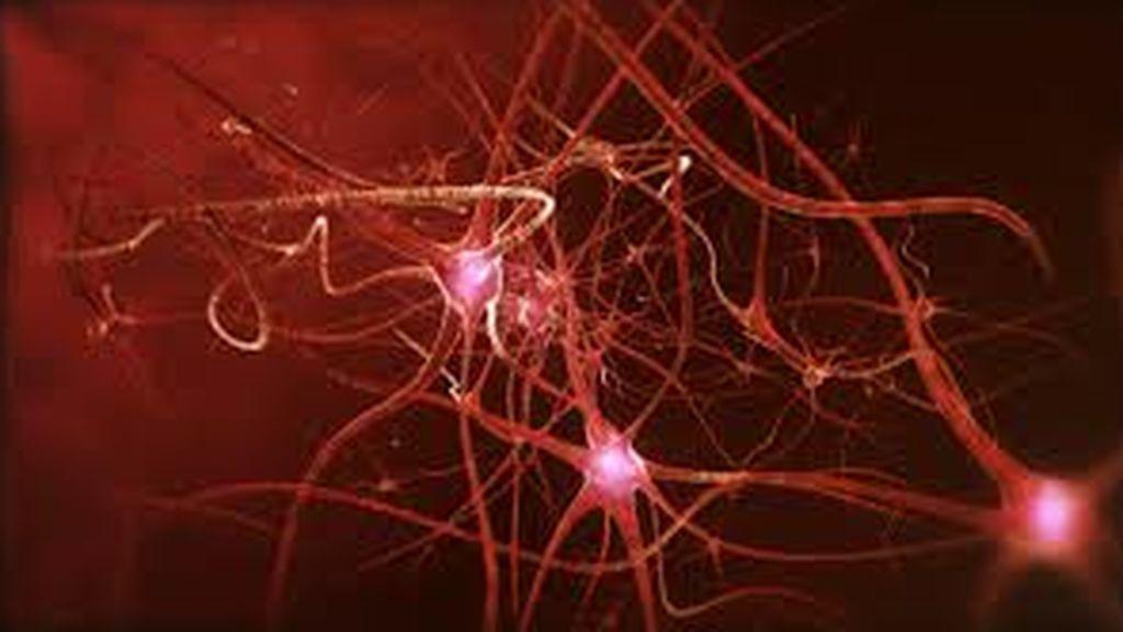 Las neuronas que regulan el estado de ánimo maduran durante la adolescencia
