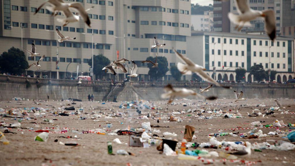 Las gaviotas se 'alimentan' de la basura de las playas
