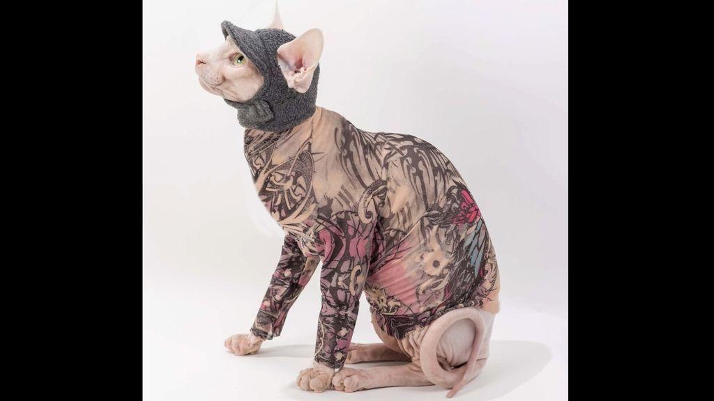 Tu gato ya puede estar tatuado sin tinta ni agujas