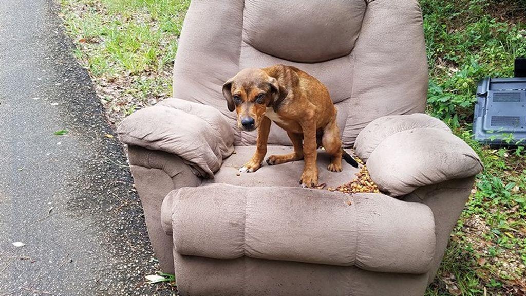 Un dueño abandona a su perro en medio de la carretera junto con una silla y un televisor en EEUU