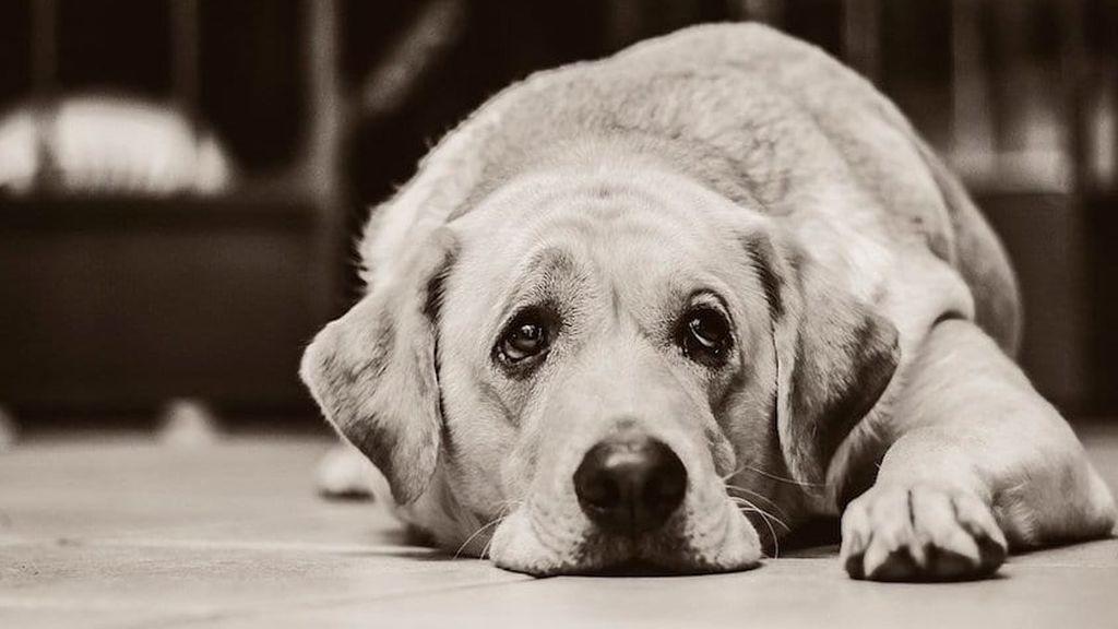 Fuenlabrada ayuda a las mascotas que también son víctimas de la violencia de género