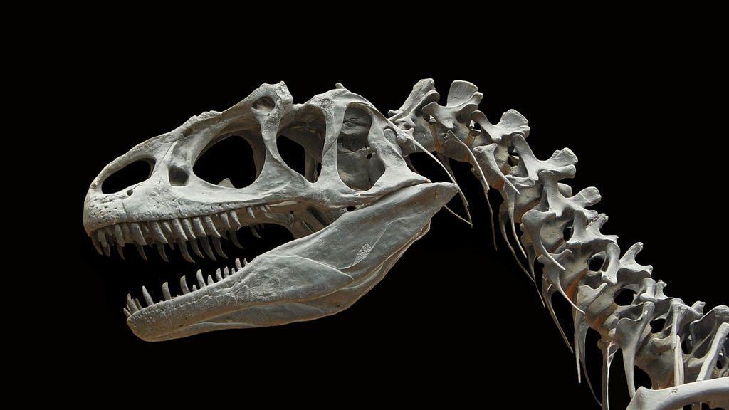 Descubren una nueva especie de dinosaurio carnívora que vivió hace 90 millones de años en Brasil