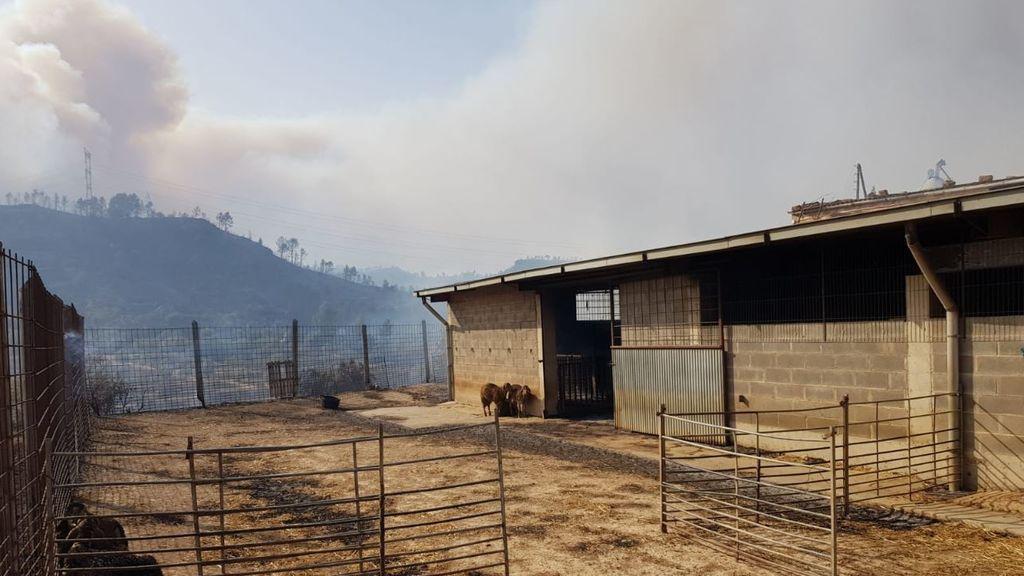 Pierde sus ovejas y Twitter le ayuda: campaña viral por el ganadero afectado por el incendio de Tarragona