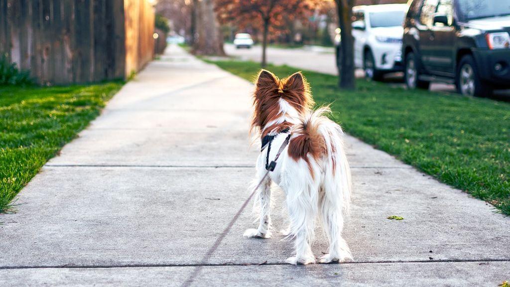 'La regla de los cinco segundos': si el asfalto te quema, a tu perro también