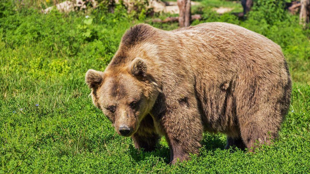 Se revela la identidad del 'hombre oso': su médico asegura que sufre psoriais, depresión y apatía