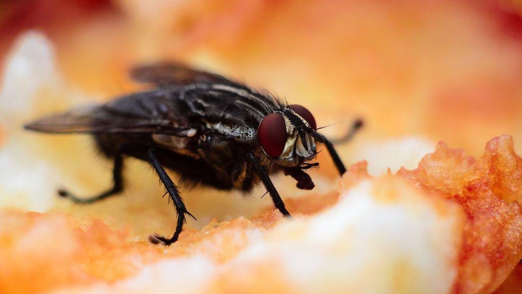 bug-1851155_1920