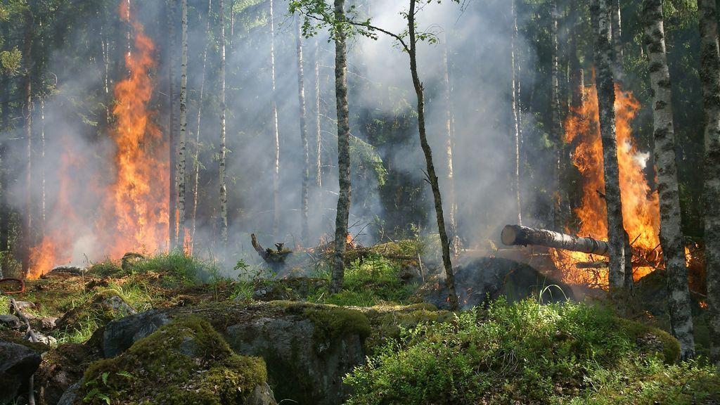 burn-burning-fire-51951