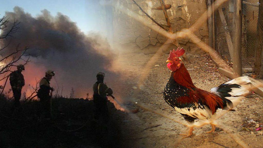 Cómo es posible que el estiércol iniciase el fuego de Tarragona