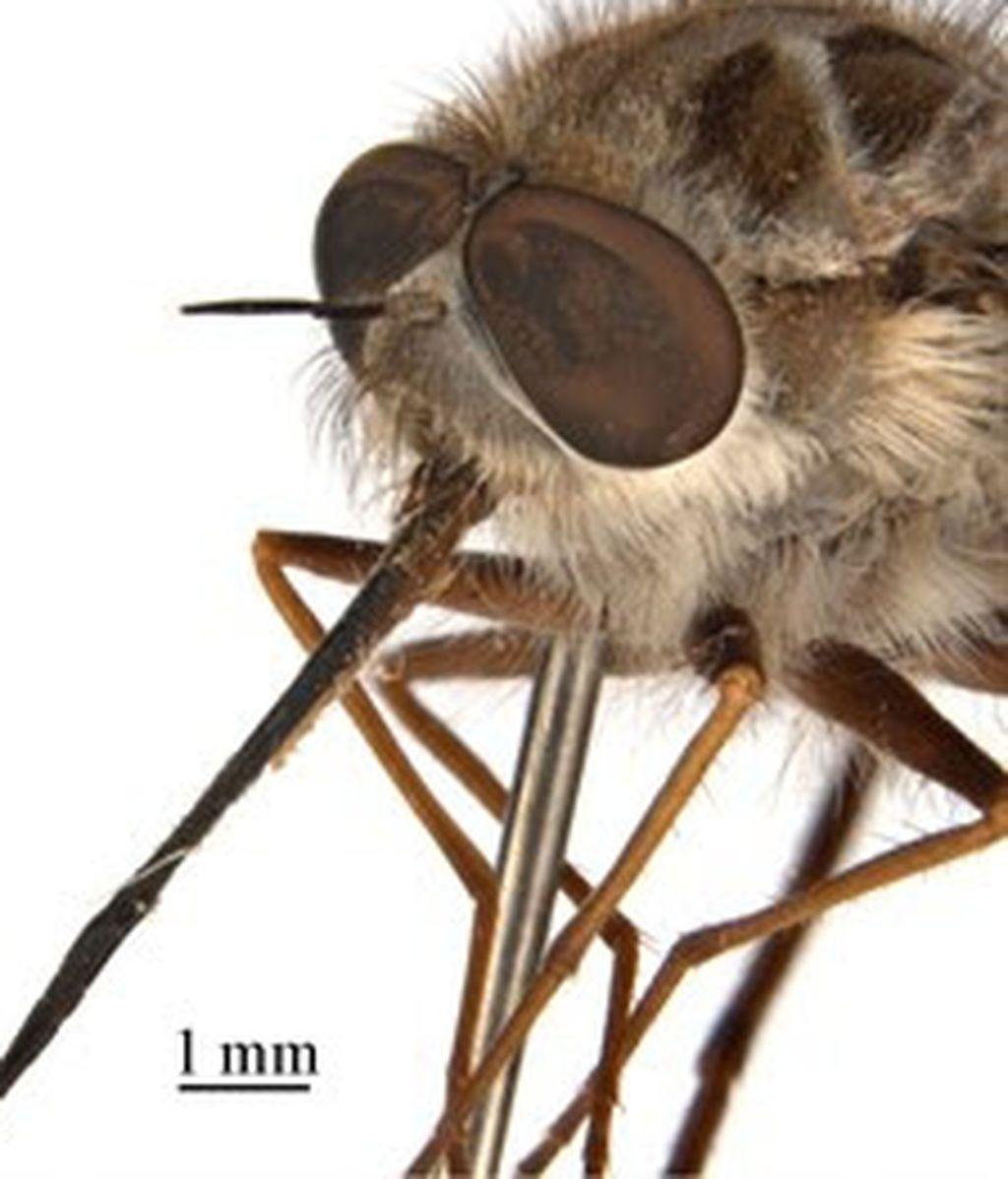 Una nueva mosca toma el nombre del Rey de la Noche de Juego de Tronos