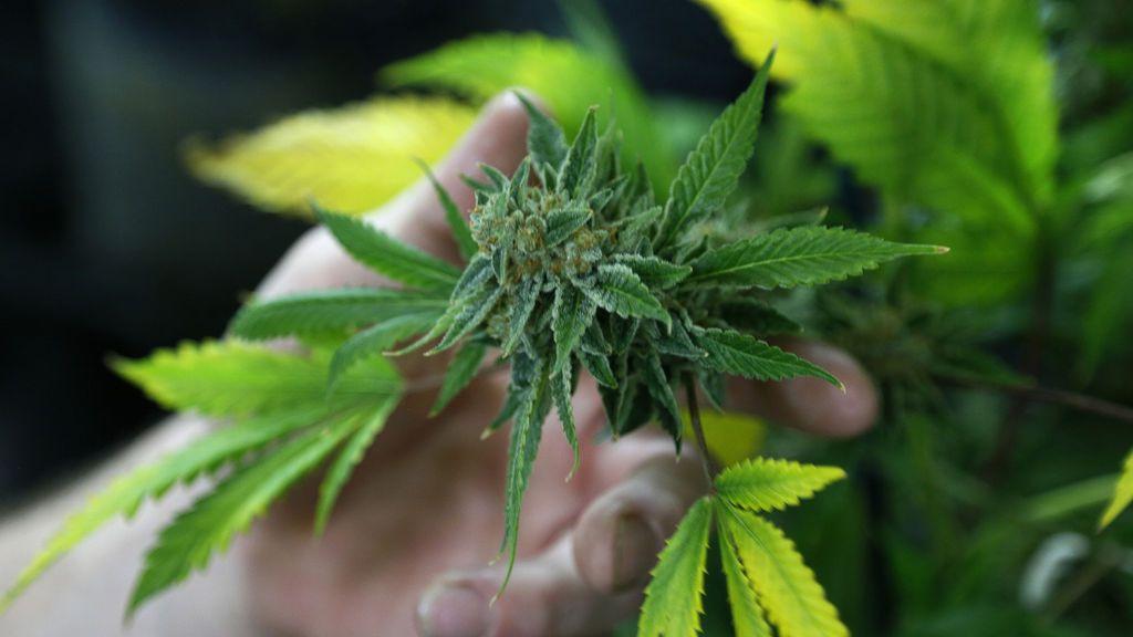 Detenidas 28 personas tras intervenir 5.000 plantas de marihuana entre El Ejido y Roquetas