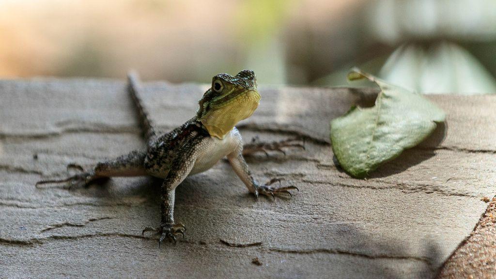 Un hombre muere agónicamente después de comerse un lagarto