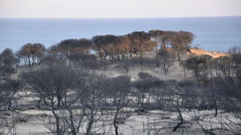 Mediterráneo inflamable: por qué hay cada vez más incendios que arrasan nuestros bosques