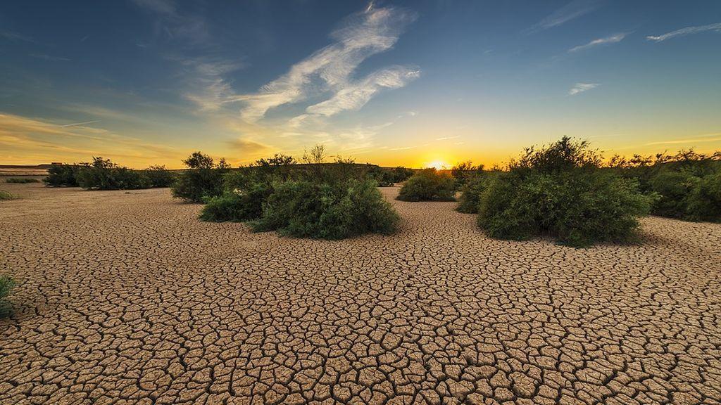 7 de julio: la mayoría de nuestros alimentos dependen del suelo