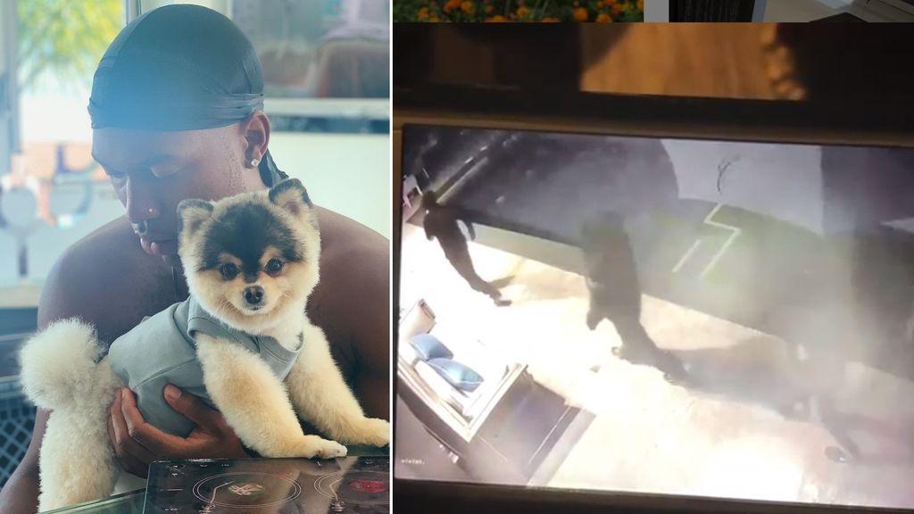 """Le roban el perro a Sturridge en su casa de Los Ángeles y ofrece pagar """"lo que sea"""" por su rescate"""