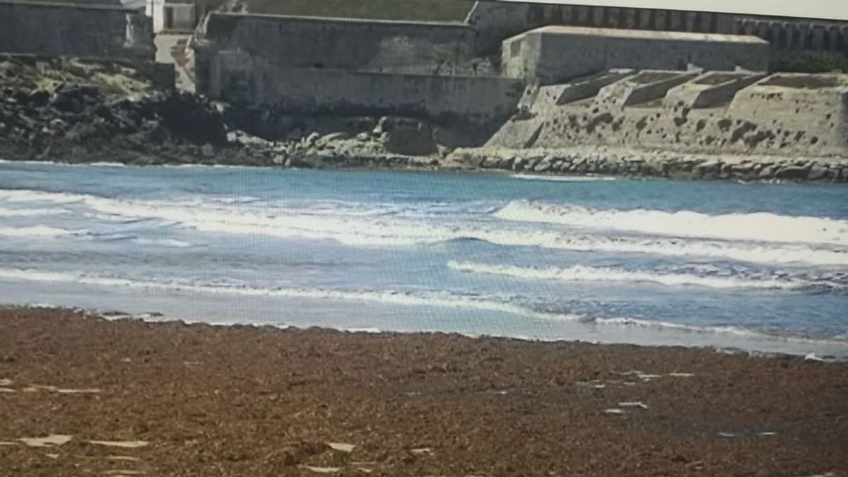 La biodiversidad del Estrecho de Gibraltar en peligro por culpa del sargazo