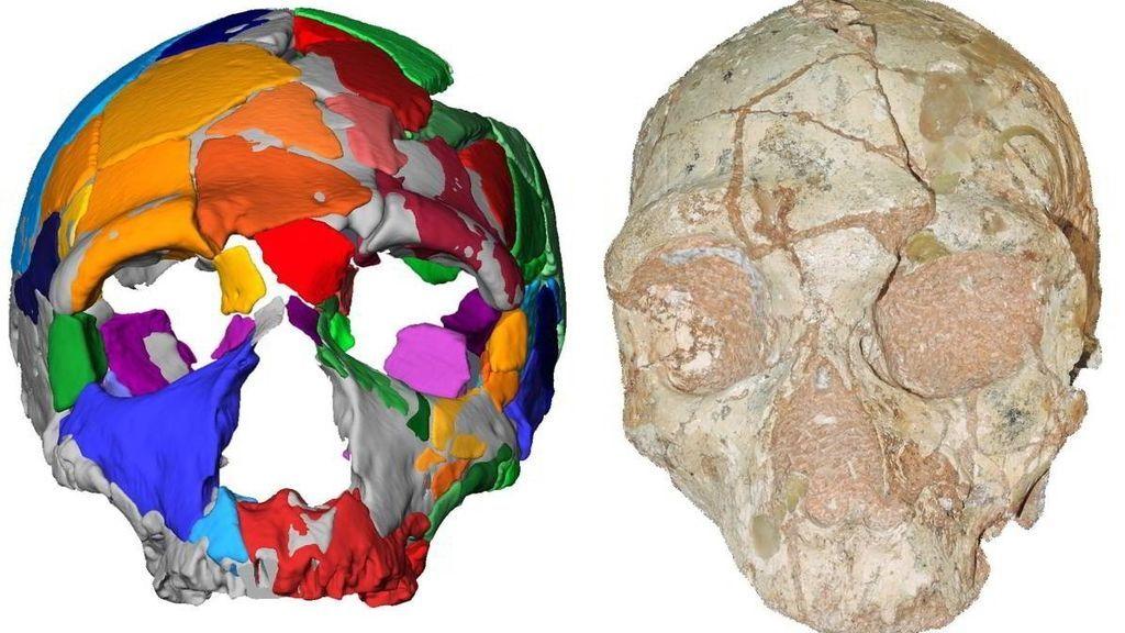 Cráneos en Grecia lo desvela: Los primeros humanos llegaron a Europa 150.000 años de lo que se creía