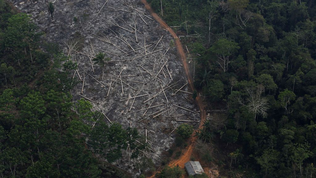 La destrucción del Amazonas: se está deforestando el equivalente a un campo de fútbol por minuto