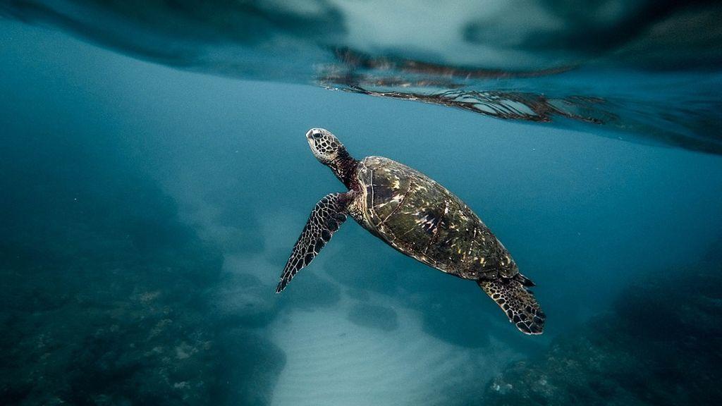 Hecho insolito en Castelló: Una tortuga marina deposita huevos en una playa