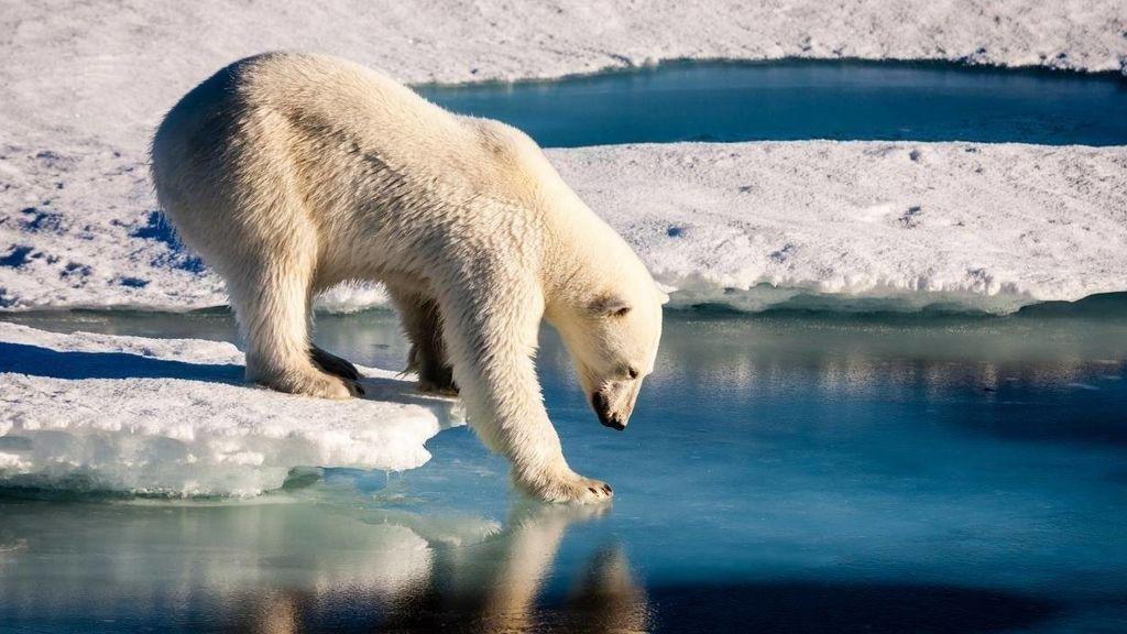 Un viaje al encuentro del oso polar: los mejores lugares y épocas del año para avistarlos