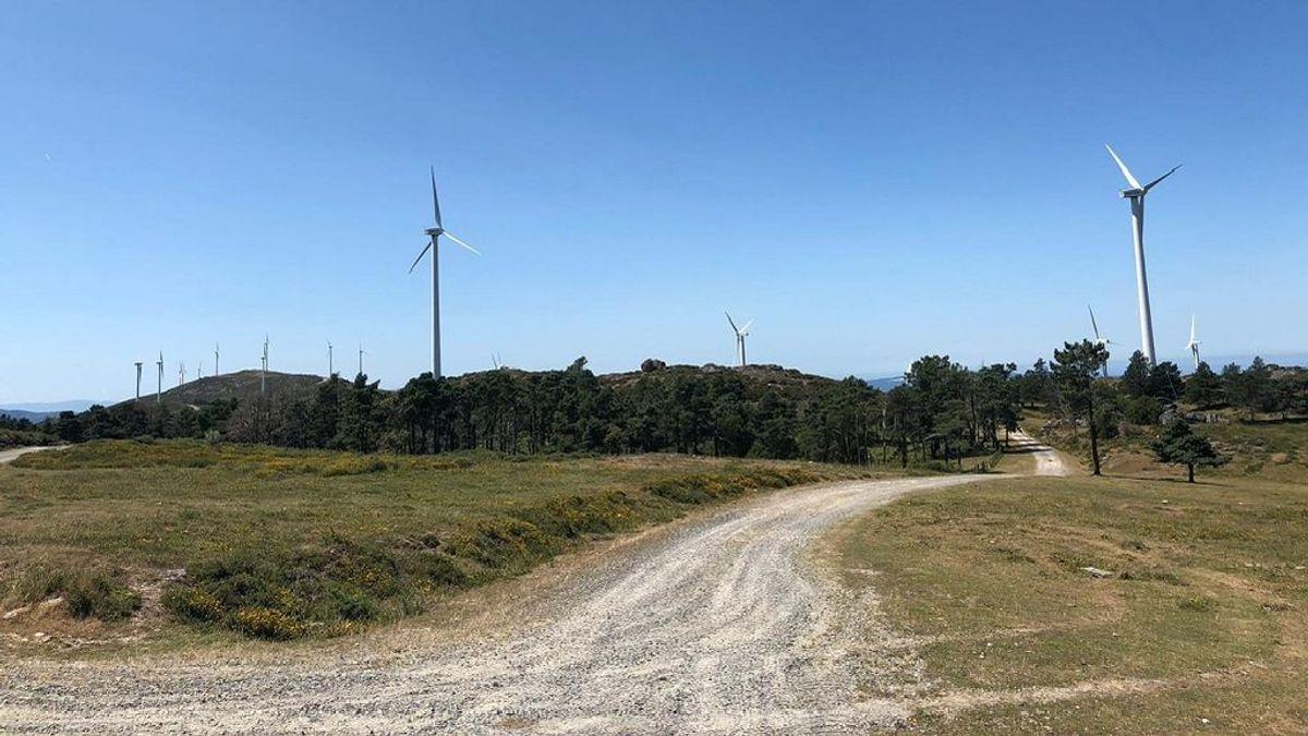 Paralizado un parque eólico gallego por la presencia de buitres negros