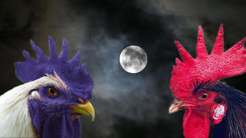 Sánchez – Iglesias: el juego de la gallina con dos gallos de pelea