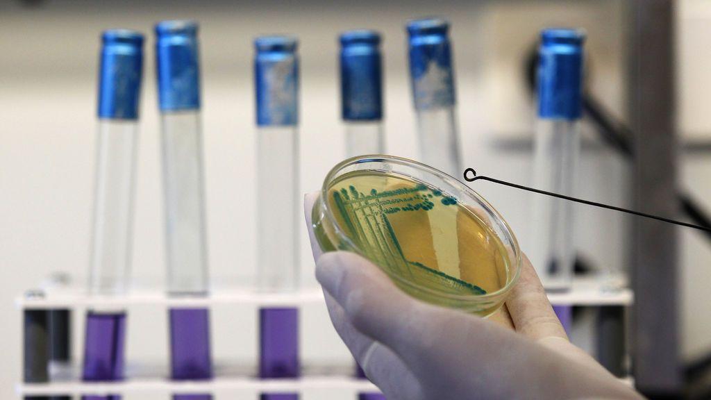 Científicos españoles encuentran relación entre la microbiota intestinal y la longevidad