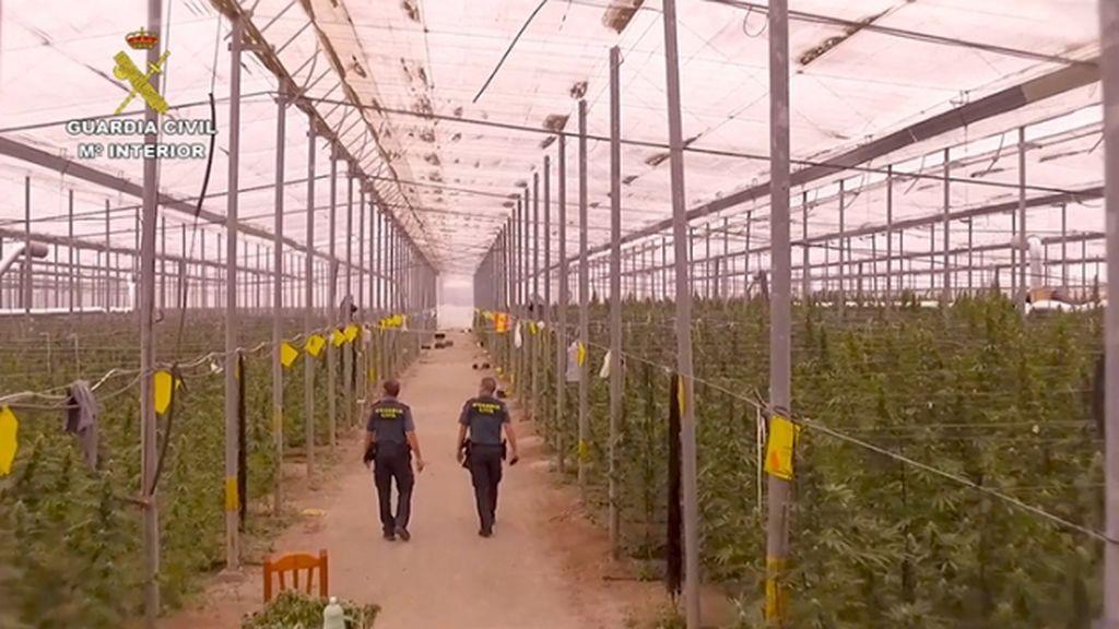 Detienen a 11 personas al desarticulan una red internacional de cultivo de marihuana en Almería y Alicante