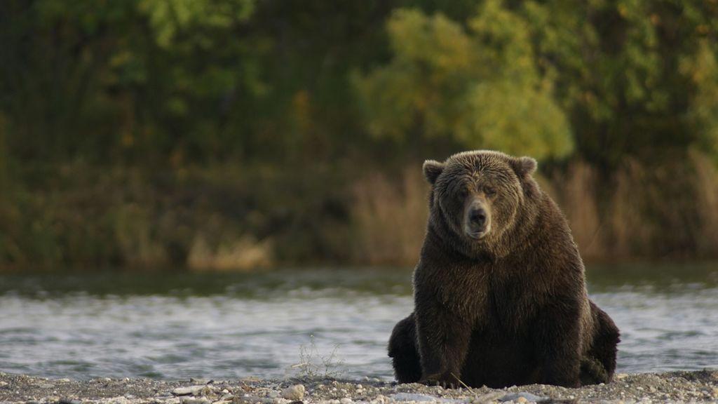 La viral hazaña de un oso: intenta robar un dispensador de marihuana