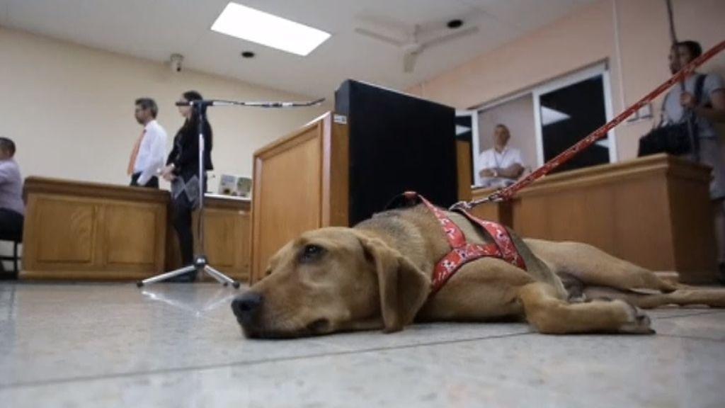 Absuelta la exdueña de 'Campeón', el primer perro en acudir a un juicio por maltrato animal