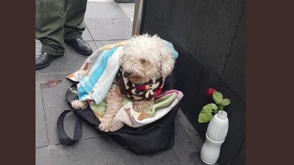 La conmovedora historia de un hombre que vende chicles para poder dar de comer a su perro