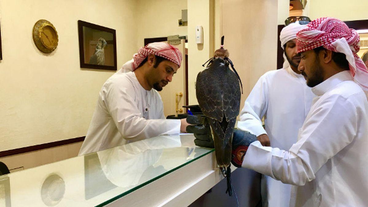 Etihad, la Compañía que permite viajar a los halcones en cabina