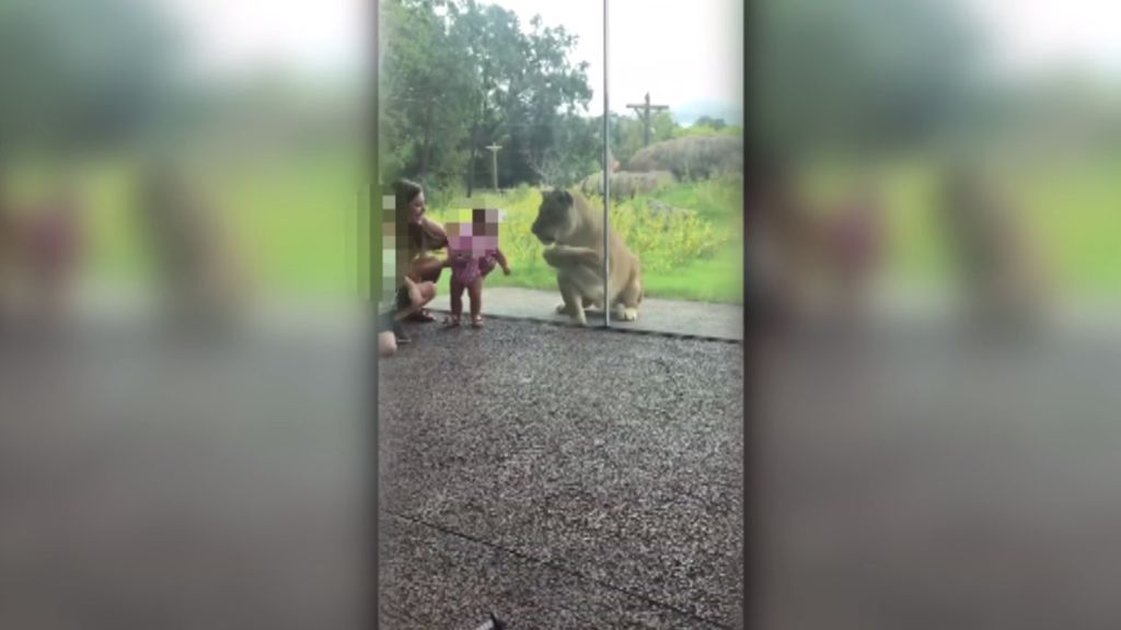 Un cristal salva a dos niños del ataque de una leona en un zoo de Nueva Orleans