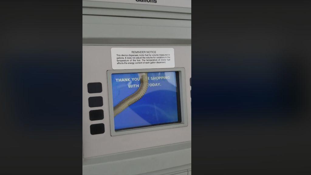 Pánico en la gasolinera: una mujer se encuentra una serpiente en el interior del surtidor de combustible