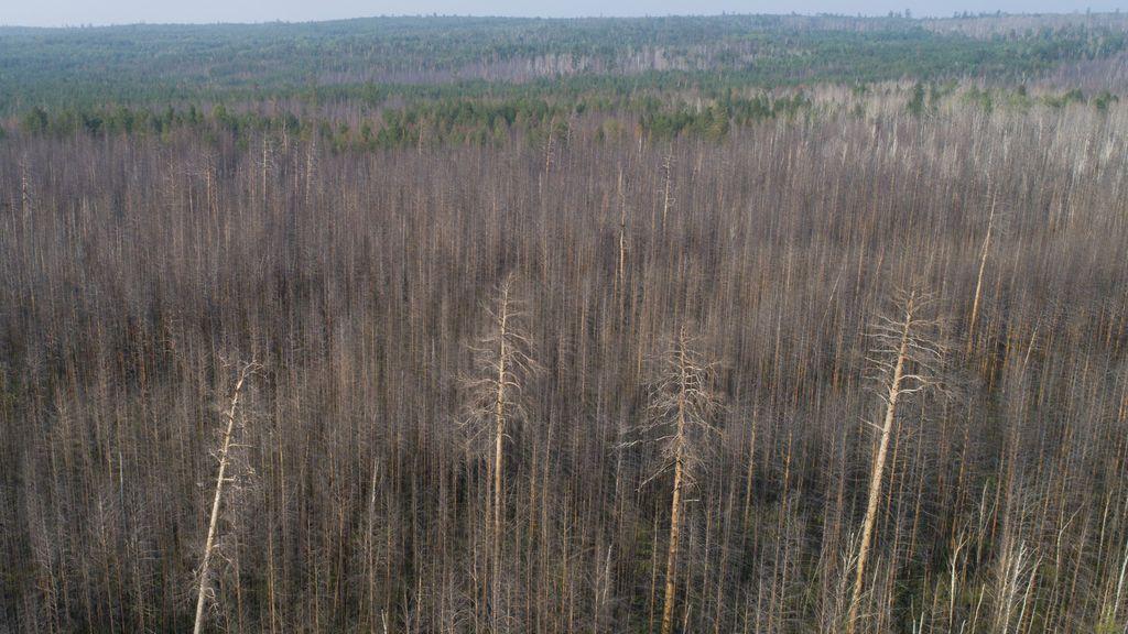 Los incendios de Siberia ya son del tamaño de Dinamarca: así van a impactar en el clima mundial