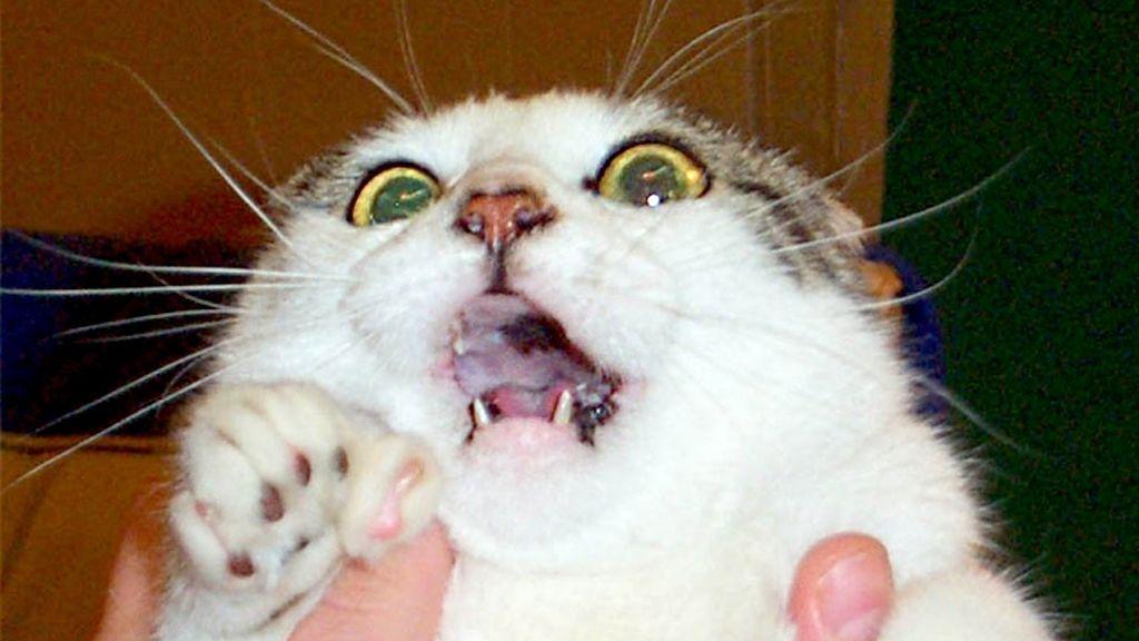 Amas a los gatos porque todavía no sabes cómo los representaban en la Edad Media