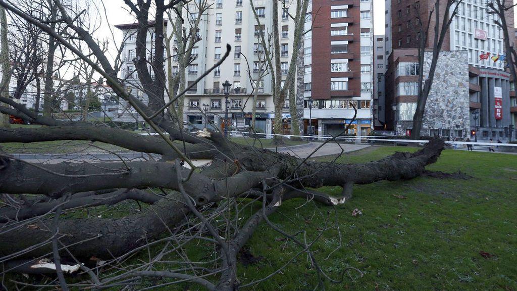 Fallece una mujer al caerle encima la rama de un árbol de un pinar de la playa de A Magdalena (A Coruña)