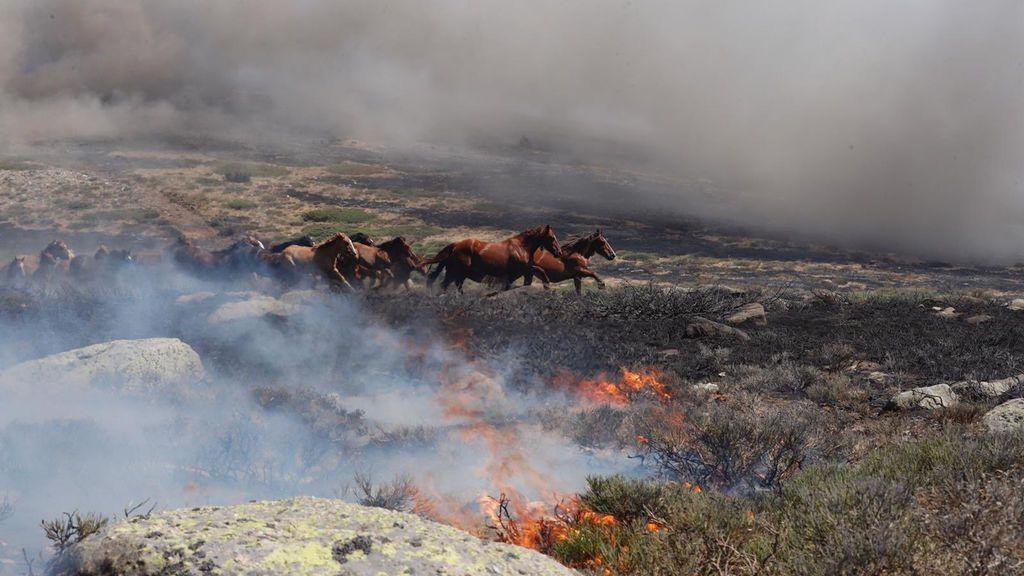 La historia tras el incendio en La Granja que ha llegado al corazón de los internautas: así salvaron a 27 caballos