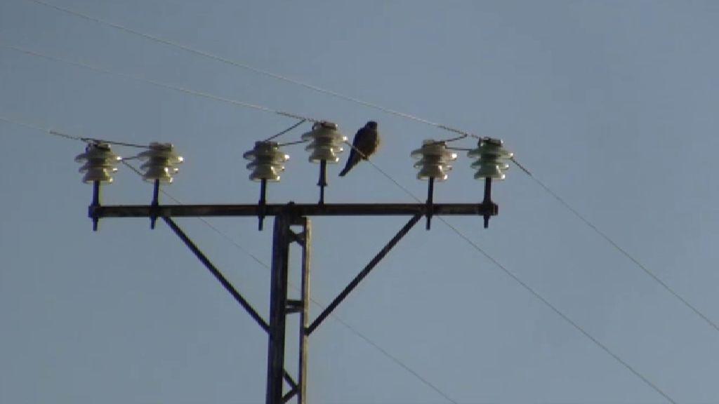 El peligro del tendido eléctrico para los animales: 120 aves han muerto electrocutadas en lo que va de año